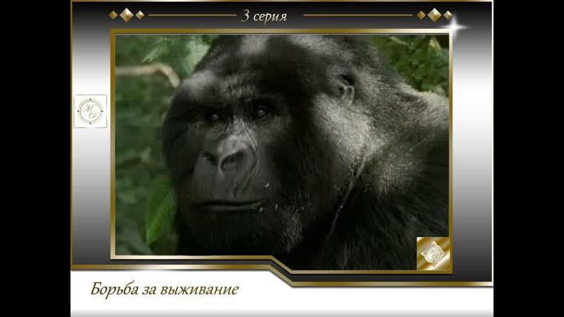 Борьба за выживание 3 серия Разрушенное царство Горная горилла