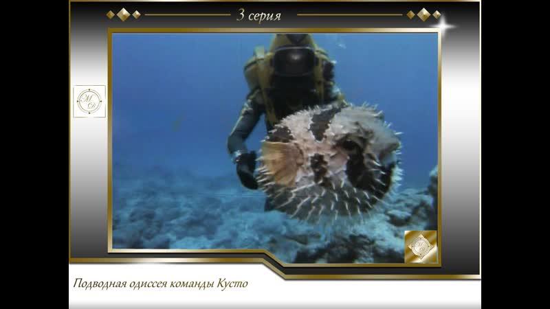 Подводная одиссея команды Кусто Выпуск 3 Коралловые джунгли 03 1967