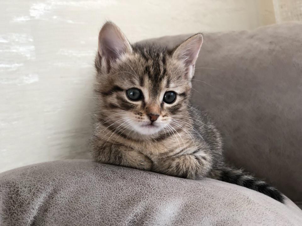 Привет, я Китти. Правда, я хорошенькая?