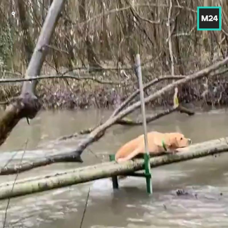 Пёс сталкивает другую собаку в воду — Москва 24
