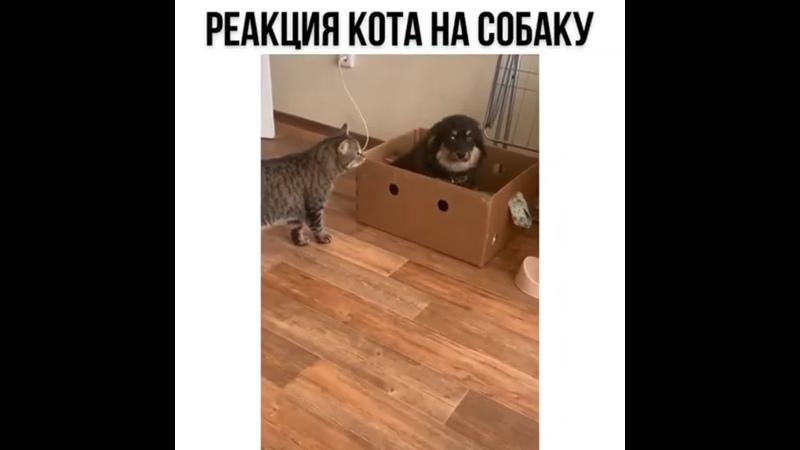 Ты пошто мою коробку занял