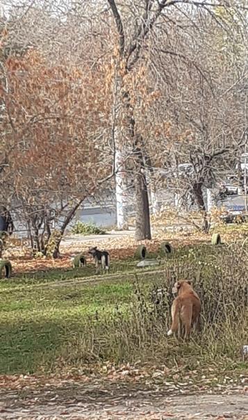 Аэродромная 58и до 74 дома свободно гуляют собаки ...