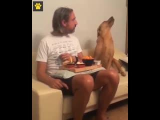 Когда делаешь вид, что не голоден