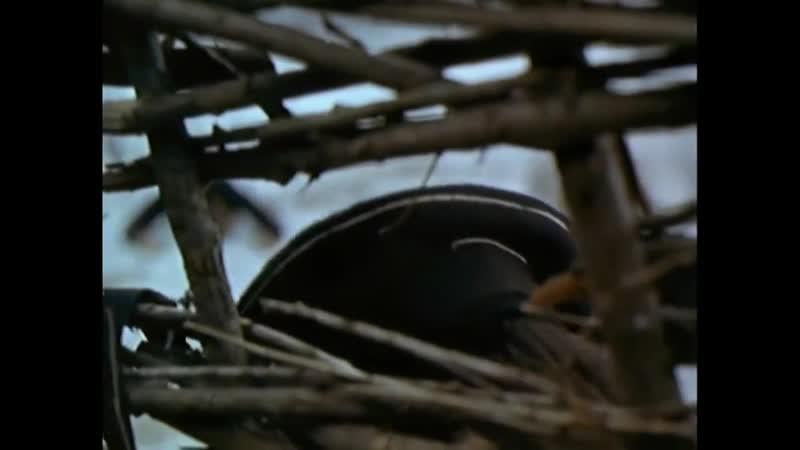Тихий Дон 1957 1958 Уничтожение отряда матросов
