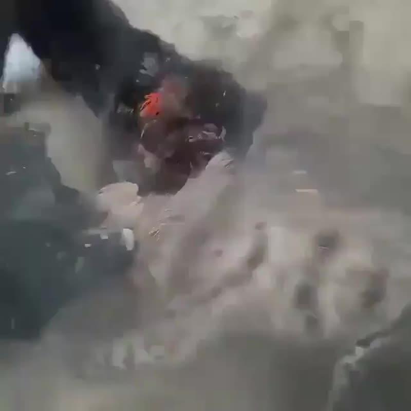 Охота на полосатую гиену