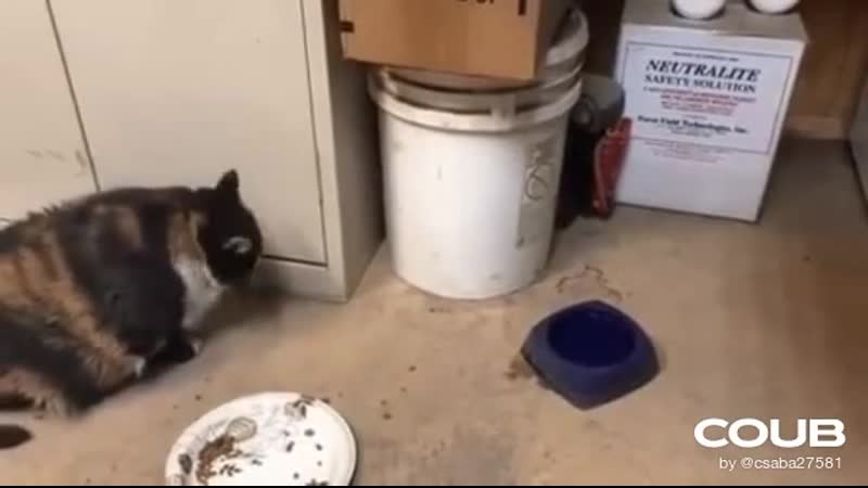 Cat is not that fast