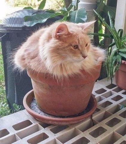Коты-флористы украсят ваш дом и вашу жизнь