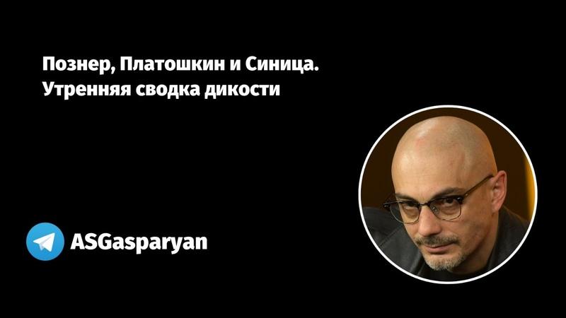 Познер Платошкин и Синица Утренняя сводка дикости