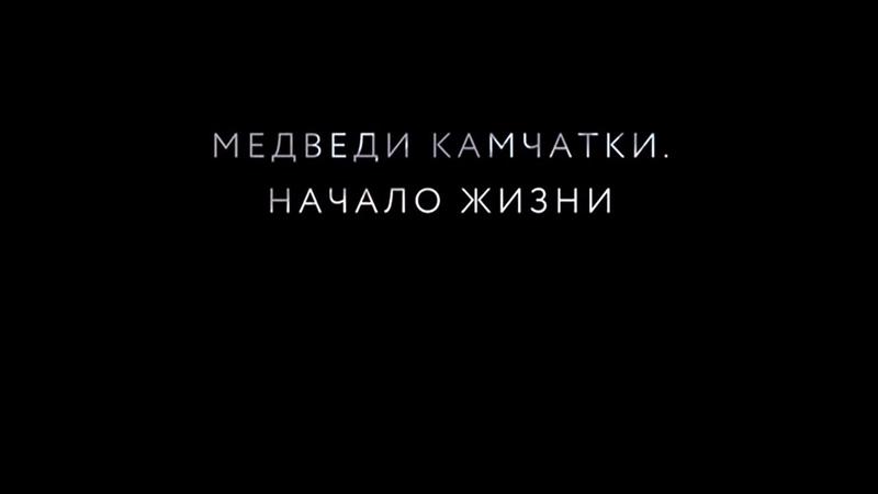Медведи Камчатки. Начало жизни (2018 документальный фильм)