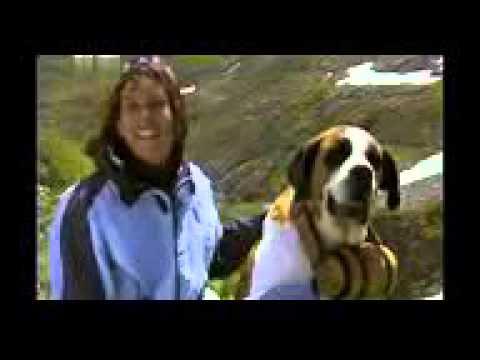 Сенбернар все породы собак 101 dogs Введение в собаковедение