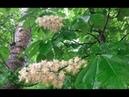 ☘🎵Невероятно красивая МУЗЫКА Сергея Грищука Поющая весна ЦВЕТЁТ КАШТАН