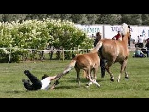 Horses are much more funny than cats Funny horse videos 2018
