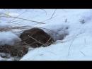 National Geographic_ Восхождение чёрного волка