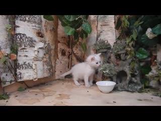 Первая мышь крохотного котенка