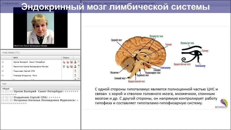 Лимбическая Система Головного Мозга_Limbicheskaja Sistema Golovnogo Mozga