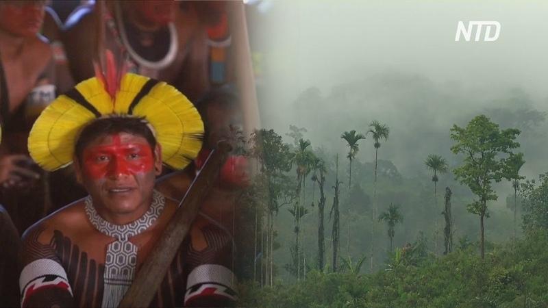 В Бразилии ускорилось исчезновение лесов Амазонии