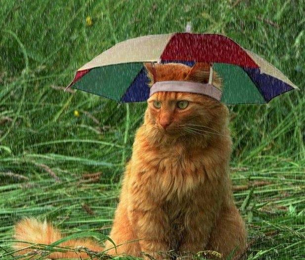 Кот из Питера. Знает толк в зонтиках☂